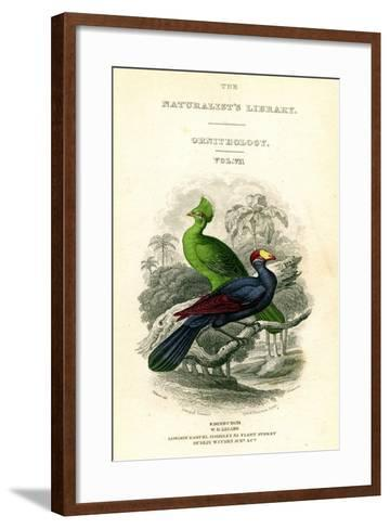 The Naturalist's Library, Ornithology, Senegal Touraco, Violet Plantain Eater, C1833-1865-William Home Lizars-Framed Art Print