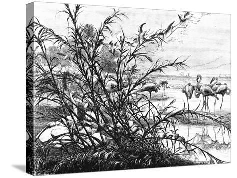 A Parliament of Birds on the Lake Menaleh, 1880-Wilhelm Gentz-Stretched Canvas Print