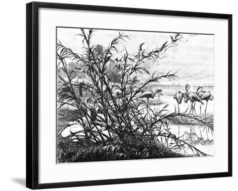 A Parliament of Birds on the Lake Menaleh, 1880-Wilhelm Gentz-Framed Art Print