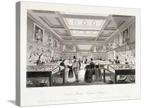 The Zoological Gallery, British Museum, Holborn, London, C1850-William Radclyffe-Stretched Canvas Print
