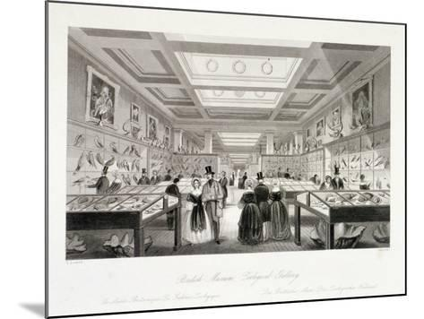 The Zoological Gallery, British Museum, Holborn, London, C1850-William Radclyffe-Mounted Giclee Print