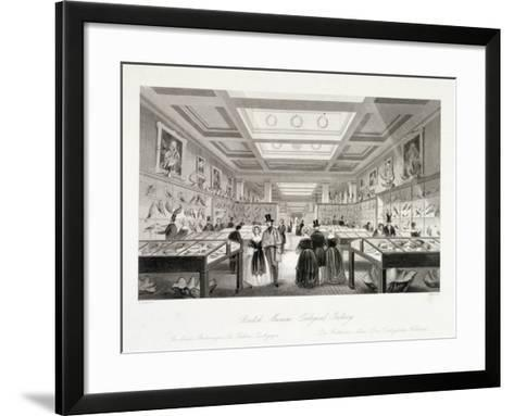 The Zoological Gallery, British Museum, Holborn, London, C1850-William Radclyffe-Framed Art Print