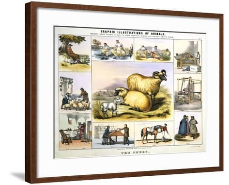 The Sheep, C1850-Day & Haghe-Framed Art Print