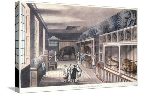 Royal Menagerie, Exeter Change, Strand, London, C1820-Thomas Rowlandson-Stretched Canvas Print