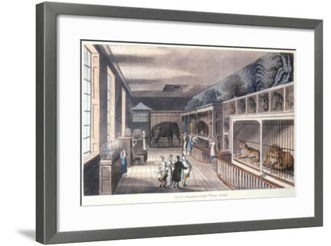 Royal Menagerie, Exeter Change, Strand, London, C1820-Thomas Rowlandson-Framed Art Print