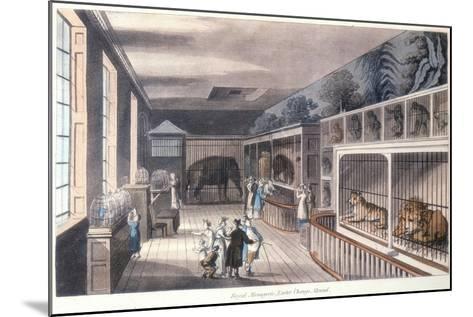 Royal Menagerie, Exeter Change, Strand, London, C1820-Thomas Rowlandson-Mounted Giclee Print