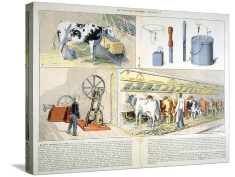 Milking Parlour Equipped with Thistle Suction and Pulsation Milking Machine, 1899--Stretched Canvas Print