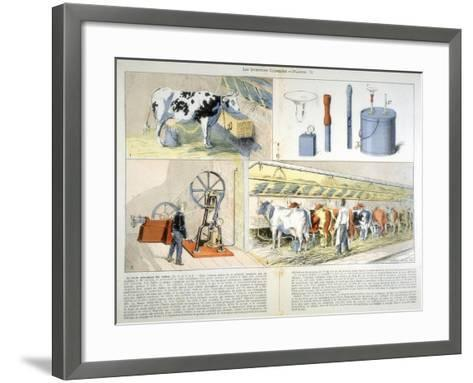 Milking Parlour Equipped with Thistle Suction and Pulsation Milking Machine, 1899--Framed Art Print