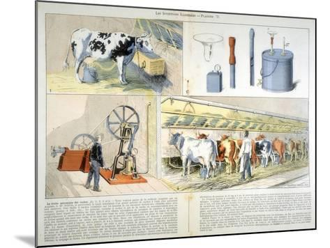 Milking Parlour Equipped with Thistle Suction and Pulsation Milking Machine, 1899--Mounted Giclee Print