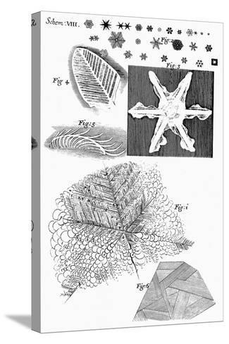 Frozen Materials Viewed by English Microscopist Robert Hooke, 1665--Stretched Canvas Print