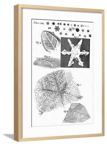 Frozen Materials Viewed by English Microscopist Robert Hooke, 1665--Framed Art Print