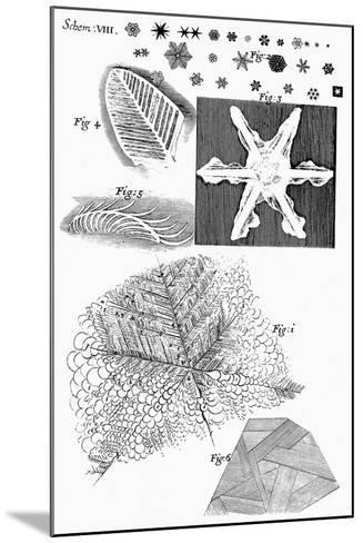 Frozen Materials Viewed by English Microscopist Robert Hooke, 1665--Mounted Giclee Print
