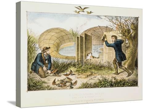 Lincolnshire Duck Decoy, C1845--Stretched Canvas Print