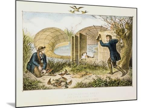 Lincolnshire Duck Decoy, C1845--Mounted Giclee Print