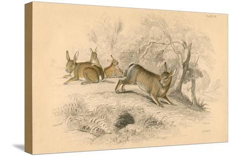 Rabbit (Oryctolagus Cuniculu), 1828--Stretched Canvas Print