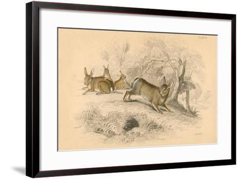 Rabbit (Oryctolagus Cuniculu), 1828--Framed Art Print