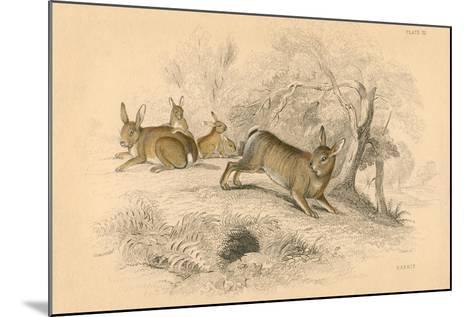 Rabbit (Oryctolagus Cuniculu), 1828--Mounted Giclee Print