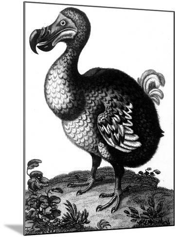 Dodo, C1804--Mounted Giclee Print