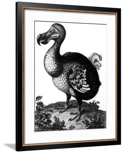 Dodo, C1804--Framed Art Print