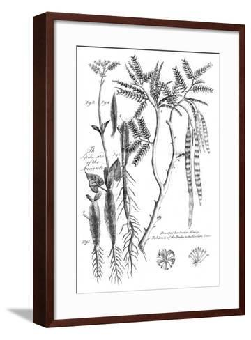 Prosopis Aculeata, 1799--Framed Art Print