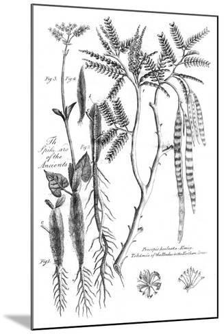 Prosopis Aculeata, 1799--Mounted Giclee Print