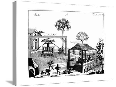 Slave Labour on a Sugar Plantation in the West Indies, 1725--Stretched Canvas Print
