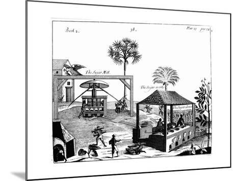 Slave Labour on a Sugar Plantation in the West Indies, 1725--Mounted Giclee Print
