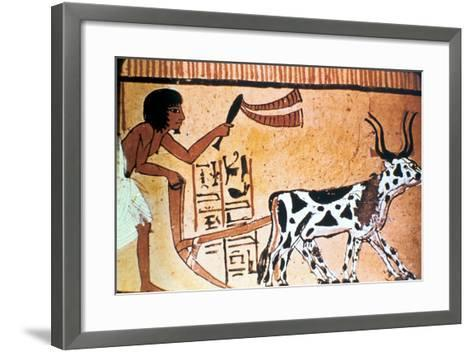 Sennutem Ploughing with Cattle, Ancient Egyptian Tomb Painting, New Kingdom (1550-1069 B)--Framed Art Print