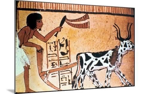 Sennutem Ploughing with Cattle, Ancient Egyptian Tomb Painting, New Kingdom (1550-1069 B)--Mounted Giclee Print