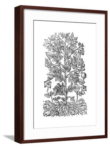 Potato, 1640--Framed Art Print
