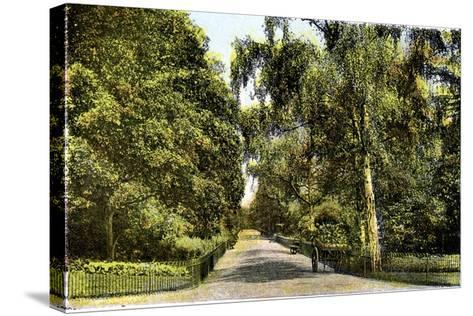 The Flower Walk, Kensington Gardens, London, 20th Century--Stretched Canvas Print