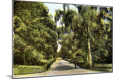The Flower Walk, Kensington Gardens, London, 20th Century--Mounted Giclee Print