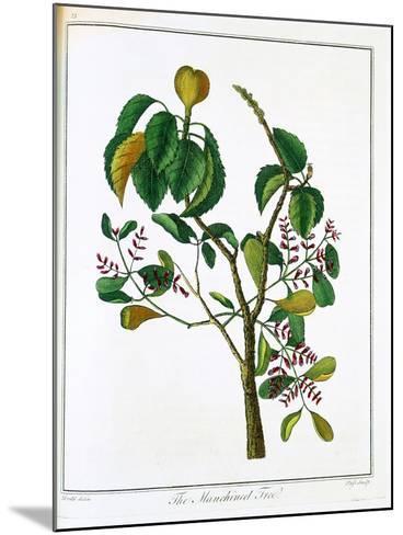 Manicheel Tree (Hippomane Mancinell) or Poison Guava, C1795--Mounted Giclee Print