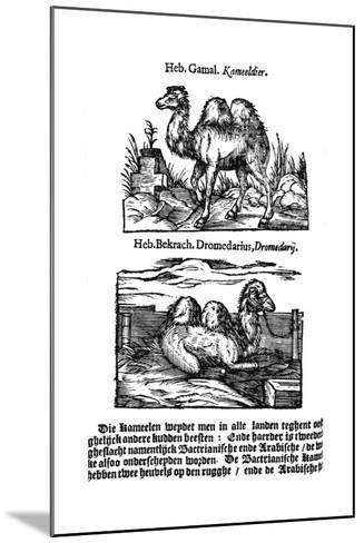 Pre-Binomial Classification of Species, 1644--Mounted Giclee Print