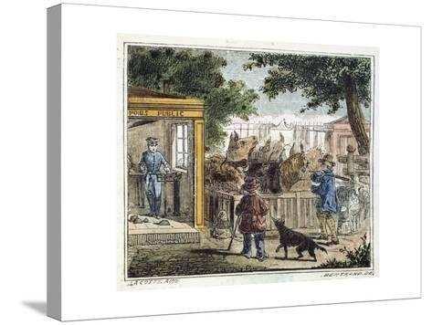 Public Weighbridge Used to Weigh Cattle in a Market, 1867--Stretched Canvas Print