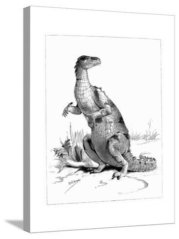 Iguanodon, 1895--Stretched Canvas Print