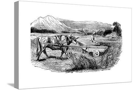 Reconstruction of Roman Reaping Cart, as Described by Pliny, Engraving, 1860--Stretched Canvas Print