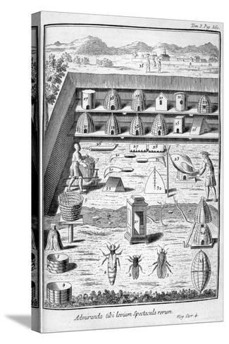 Beekeeping, 1775--Stretched Canvas Print