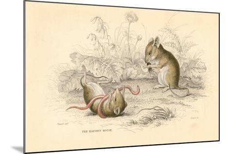 Harvest Mouse (Micromys Minutu) of the Old World, 1828--Mounted Giclee Print