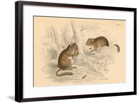 Common Dormouse (Muscardinus Arvellanariu), Hibernating Rodent, 1828--Framed Art Print