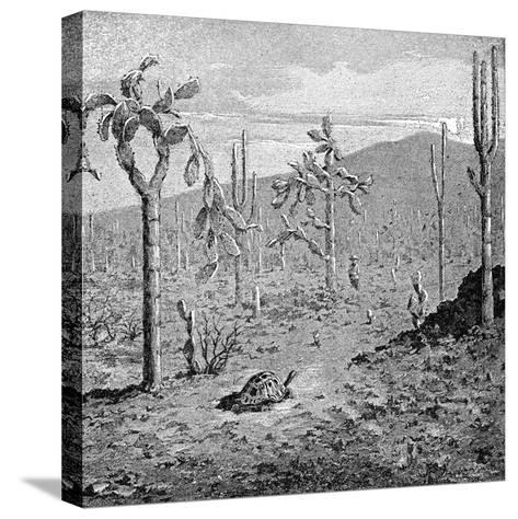 Indefatigable Island, Galapagos Archipelago, 1895--Stretched Canvas Print