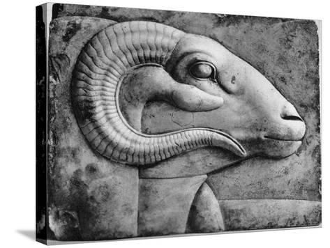 A Ram's Head, Egypt, 1936--Stretched Canvas Print