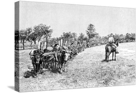 A Convoy of Wagons, South America, 1895--Stretched Canvas Print