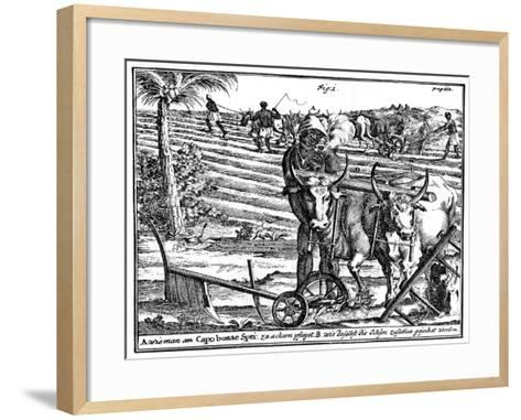 Yoking Oxen and Ploughing Fields, South Africa, 18th Century--Framed Art Print