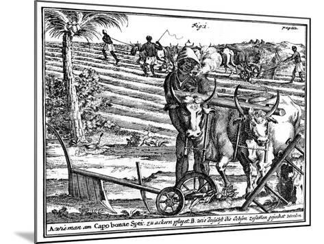 Yoking Oxen and Ploughing Fields, South Africa, 18th Century--Mounted Giclee Print