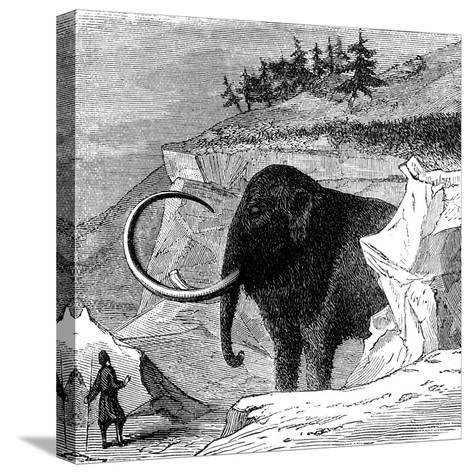 Discovery of a Woolly Mammoth, 1779--Stretched Canvas Print