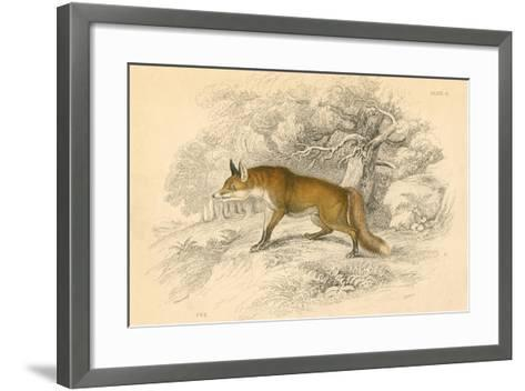 Common or Red Fox (Vulpes Vulpe), 1828--Framed Art Print