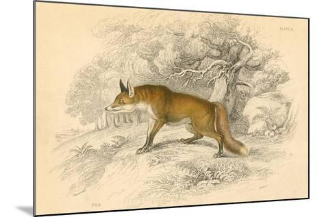 Common or Red Fox (Vulpes Vulpe), 1828--Mounted Giclee Print