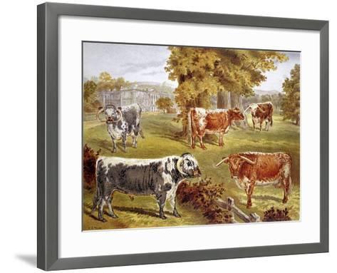 Longhorn Cattle Owned by Sir John Harpur-Crewe, Calke Abbey, 1885--Framed Art Print