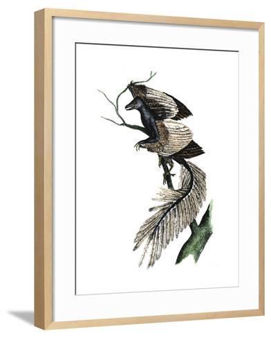 Archaeopteryx - the First Bird, 1886--Framed Art Print